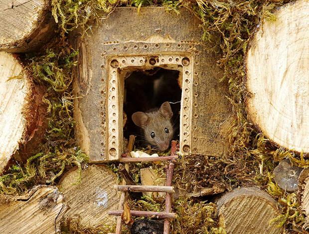 Фотограф соорудил для мышек дом.