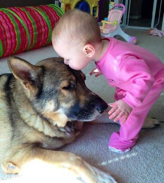 дети должны расти с домашними животными (15)