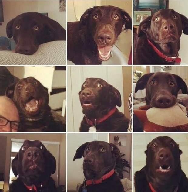 Эти 8 фотографий способны вас рассмешить