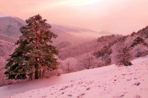 В Гидрометцентре пообещали россиянам «розовую зиму»