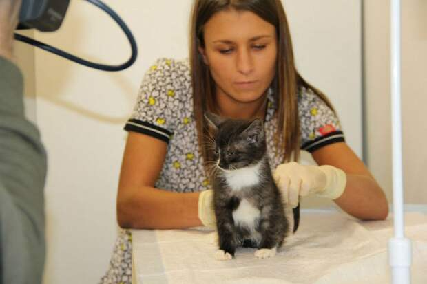 За состоянием котенка следят опытные ветеринары. ФОТО: соцсети