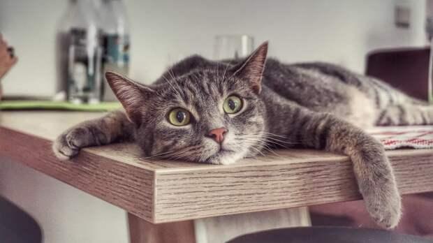 О частых ошибках при воспитании котенка рассказали ветеринары