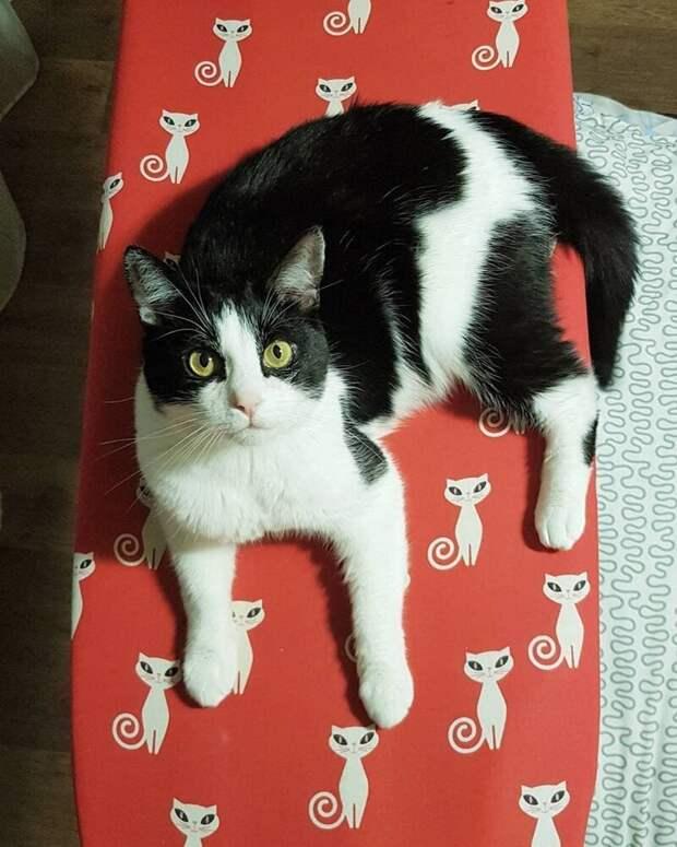 Это — кот по имени Пусик, и он из Белоруссии Пусик, бумага, видео, животные, кот, рулоны, хозяева