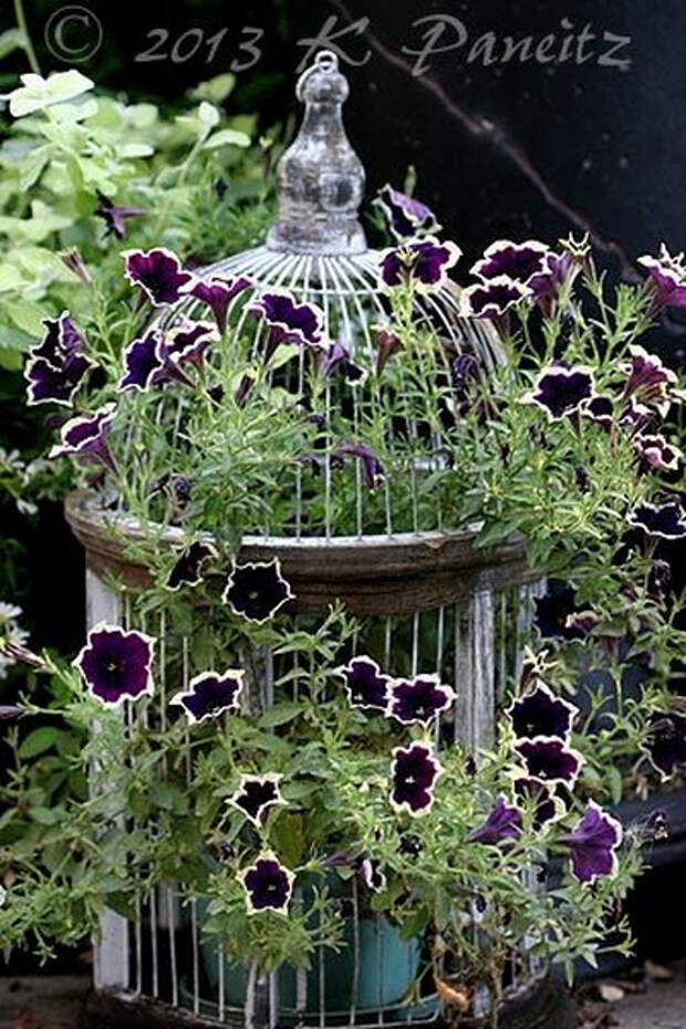 flowers-in-bird-cages-ideas2-4-2 (400x600, 317Kb)