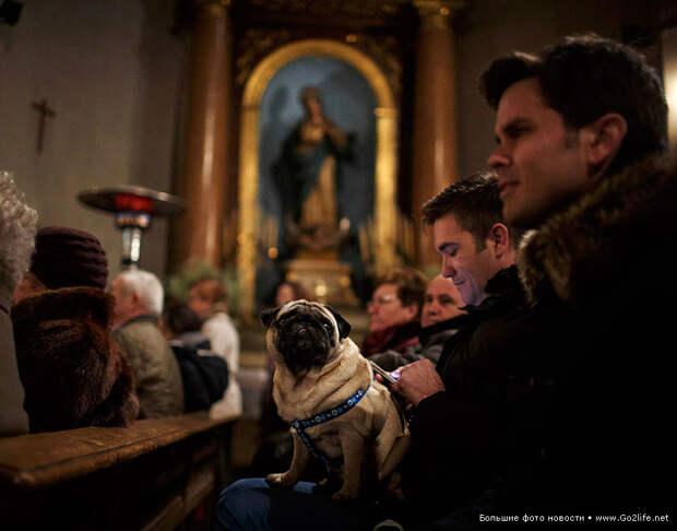 В Испании благословили домашних животных