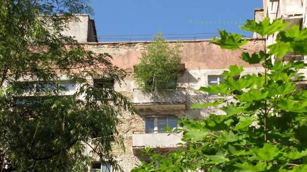 chnpp08 Оживающий Чернобыль