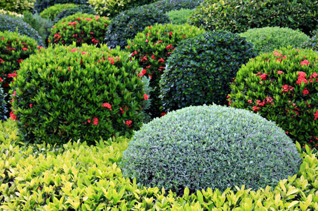 Topiary Сток-фотография: 54630241 : Shutterstock