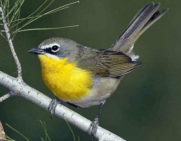 Источник фото: audubon.org