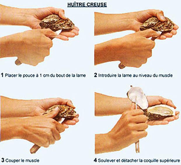 Как едят устриц
