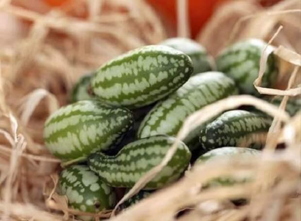 Семена редких сортов овощей и цветов