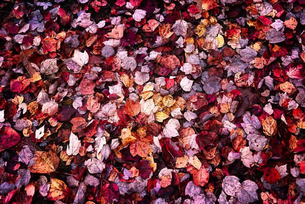 Autumn Walk by Stephanie Shen on 500px.com