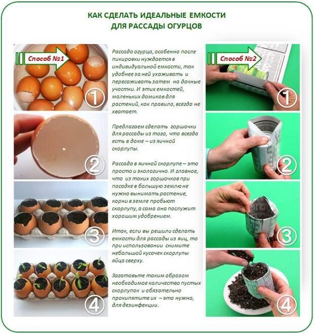 Как вырастить крепкую рассаду огурцов в домашних условиях