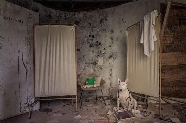 Фотограф иеепитбуль рассказывают оправилах жизни при коронавирусе