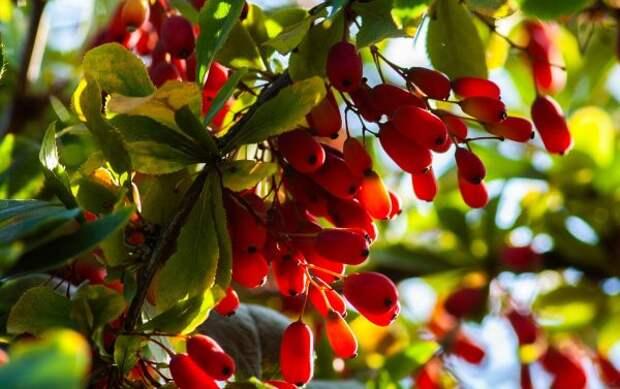 Топ 10 стран мира где растут самые редкие виды фруктов