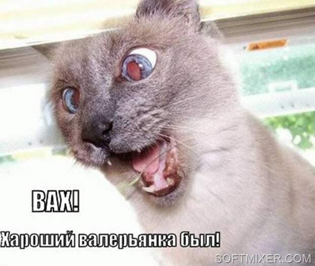 haroshiy-valeryanka_1271988236