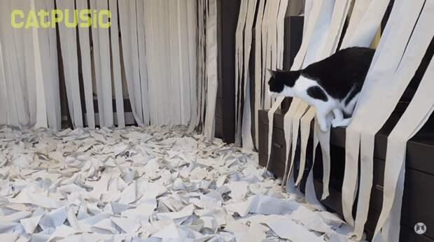 Запускайте котика! Пусик, бумага, видео, животные, кот, рулоны, хозяева