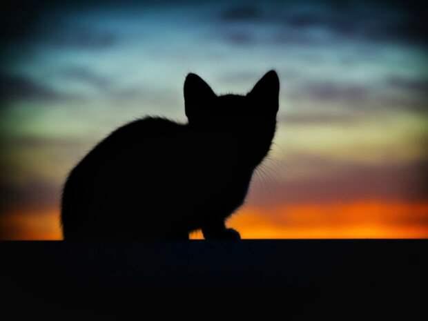 Во всероссийском конкурсе служебных кошек победила петербургская Муся