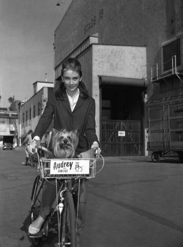 Ехала Одри на велосипеде.