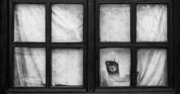 7238560-R3L8T8D-650-cat-waiting-window-32
