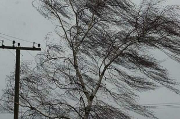Сильный ветер и +15 градусов ожидаются в Смоленской области в День Победы