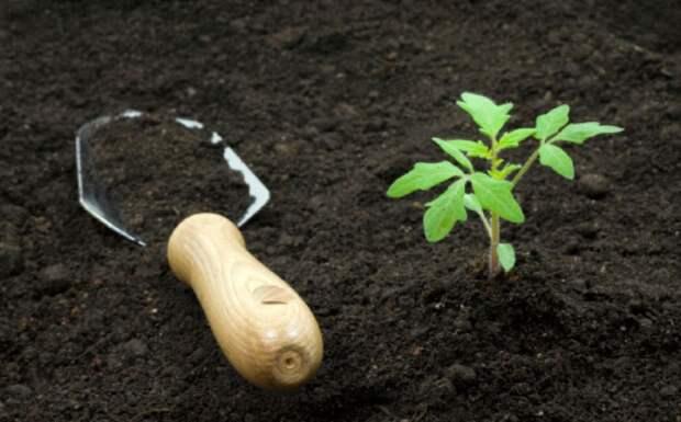 Как улучшить плодородие почвы?