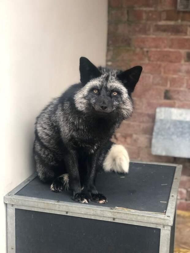 Британцы нашли у себя во дворе гостя, который оказался редким зверем