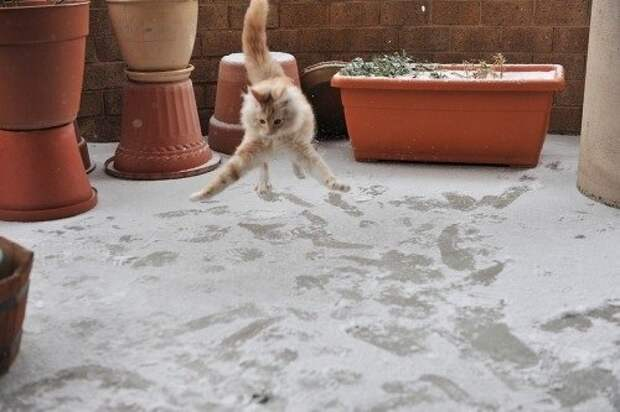 Реакция котэ на первый в его жизни снег животные, зима, интересно, кот, котэ, снег, юмор
