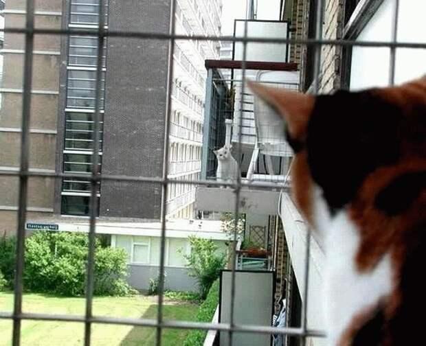 Кошачья любовь с первого взгляда. Фото