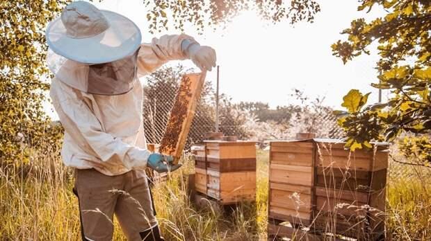 Зачем пчелам нужны в улье дармоеды и бездельники трутни