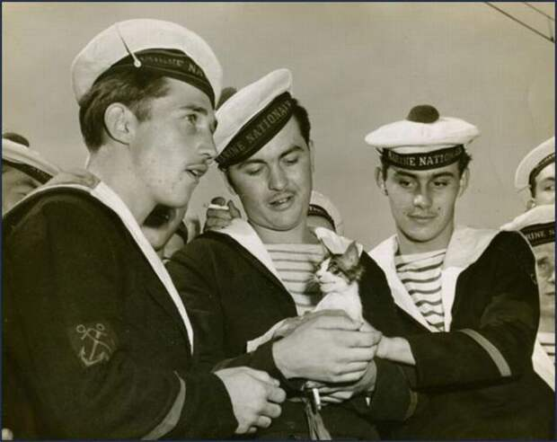 Кошки на кораблях.