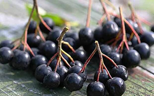 Омоложение для черноплодки